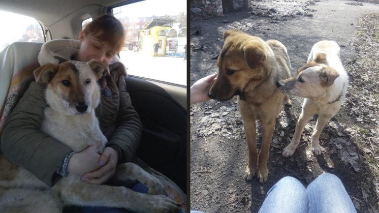 покалічена собака в Умані фото