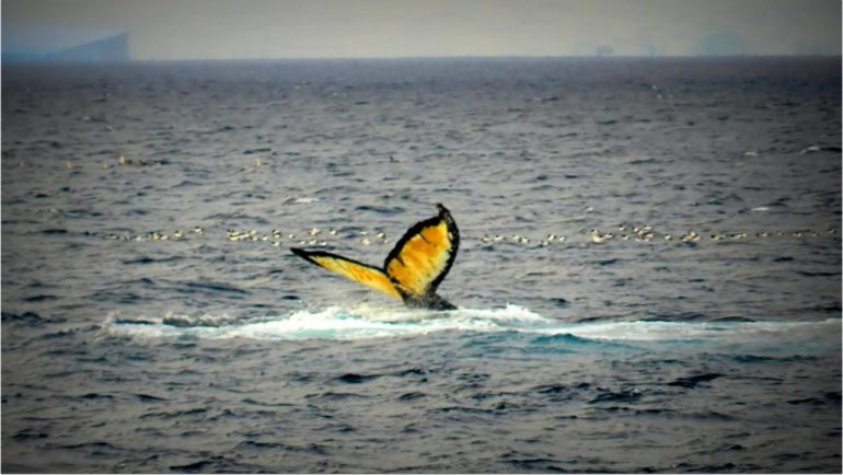 фото горбатого кита